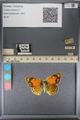 http://mczbase.mcz.harvard.edu/specimen_images/ent-lepidoptera/images/2014_01_16/IMG_154052.JPG