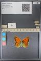 http://mczbase.mcz.harvard.edu/specimen_images/ent-lepidoptera/images/2014_01_16/IMG_154055.JPG