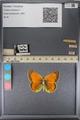 http://mczbase.mcz.harvard.edu/specimen_images/ent-lepidoptera/images/2014_01_16/IMG_154056.JPG