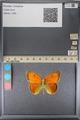 http://mczbase.mcz.harvard.edu/specimen_images/ent-lepidoptera/images/2014_01_16/IMG_154059.JPG