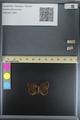 http://mczbase.mcz.harvard.edu/specimen_images/ent-lepidoptera/images/2014_08_08/IMG_175907.JPG