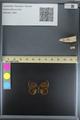 http://mczbase.mcz.harvard.edu/specimen_images/ent-lepidoptera/images/2014_08_08/IMG_175908.JPG