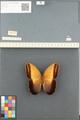 http://mczbase.mcz.harvard.edu/specimen_images/ent-lepidoptera/images/2014_08_13/IMG_175946.JPG