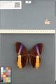 http://mczbase.mcz.harvard.edu/specimen_images/ent-lepidoptera/images/2014_08_13/IMG_175954.JPG
