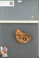 http://mczbase.mcz.harvard.edu/specimen_images/ent-lepidoptera/images/2014_08_13/IMG_175961.JPG