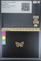 http://mczbase.mcz.harvard.edu/specimen_images/ent-lepidoptera/images/2014_09_29/IMG_176078.JPG