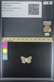 http://mczbase.mcz.harvard.edu/specimen_images/ent-lepidoptera/images/2014_09_29/IMG_176079.JPG