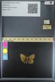 http://mczbase.mcz.harvard.edu/specimen_images/ent-lepidoptera/images/2014_10_23/IMG_176122.JPG