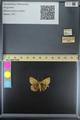 http://mczbase.mcz.harvard.edu/specimen_images/ent-lepidoptera/images/2014_10_23/IMG_176123.JPG