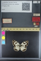http://mczbase.mcz.harvard.edu/specimen_images/ent-lepidoptera/images/2015_06_09/IMG_176242.JPG