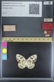 http://mczbase.mcz.harvard.edu/specimen_images/ent-lepidoptera/images/2015_06_09/IMG_176243.JPG
