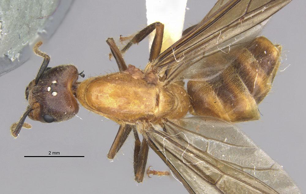 Image of Azteca merida