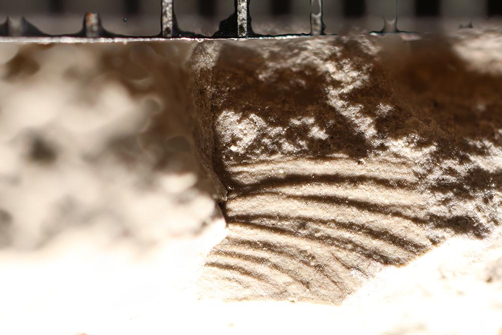 http://mczbase.mcz.harvard.edu/specimen_images/entomology/paleo/large/PALE-10878_Ephemeroptera.jpg