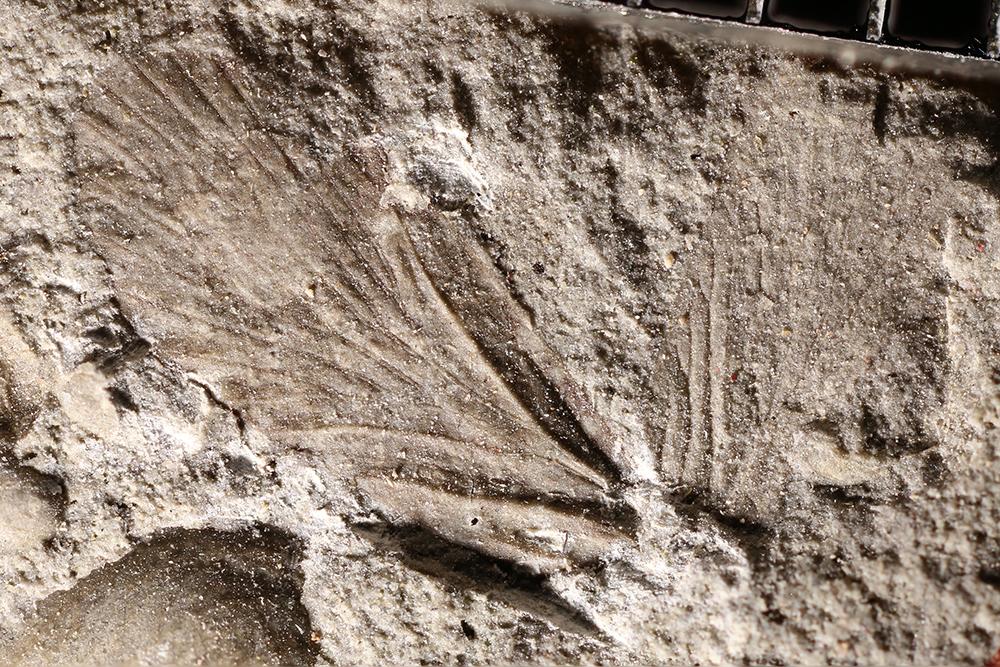 http://mczbase.mcz.harvard.edu/specimen_images/entomology/paleo/large/PALE-10986_Mecoptera.jpg