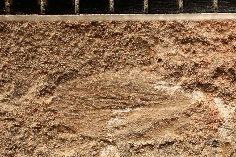 http://mczbase.mcz.harvard.edu/specimen_images/entomology/paleo/large/PALE-11193_Lemmatophoridae.jpg