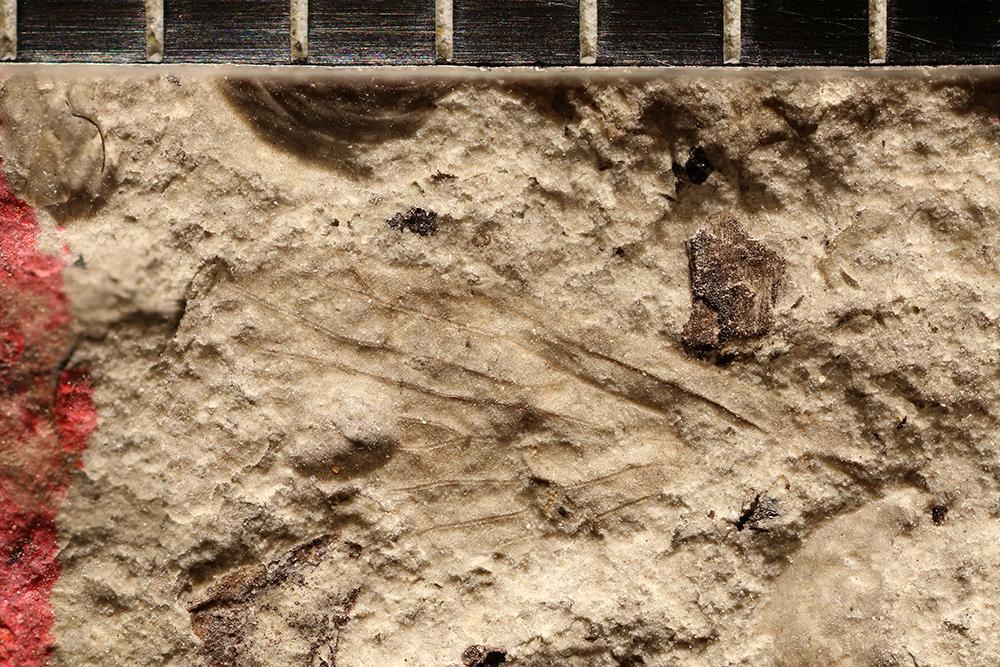 http://mczbase.mcz.harvard.edu/specimen_images/entomology/paleo/large/PALE-11254_Lemmatophoridae.jpg
