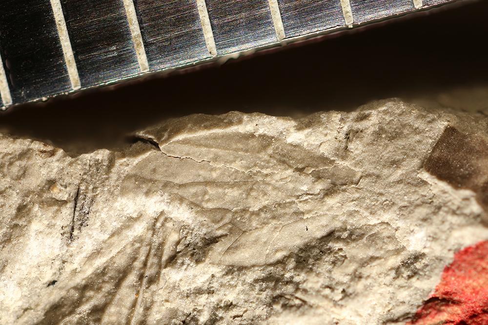 http://mczbase.mcz.harvard.edu/specimen_images/entomology/paleo/large/PALE-11427_Hemiptera.jpg