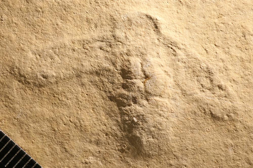 http://mczbase.mcz.harvard.edu/specimen_images/entomology/paleo/large/PALE-11545_Lithoblatta_lithophila.jpg