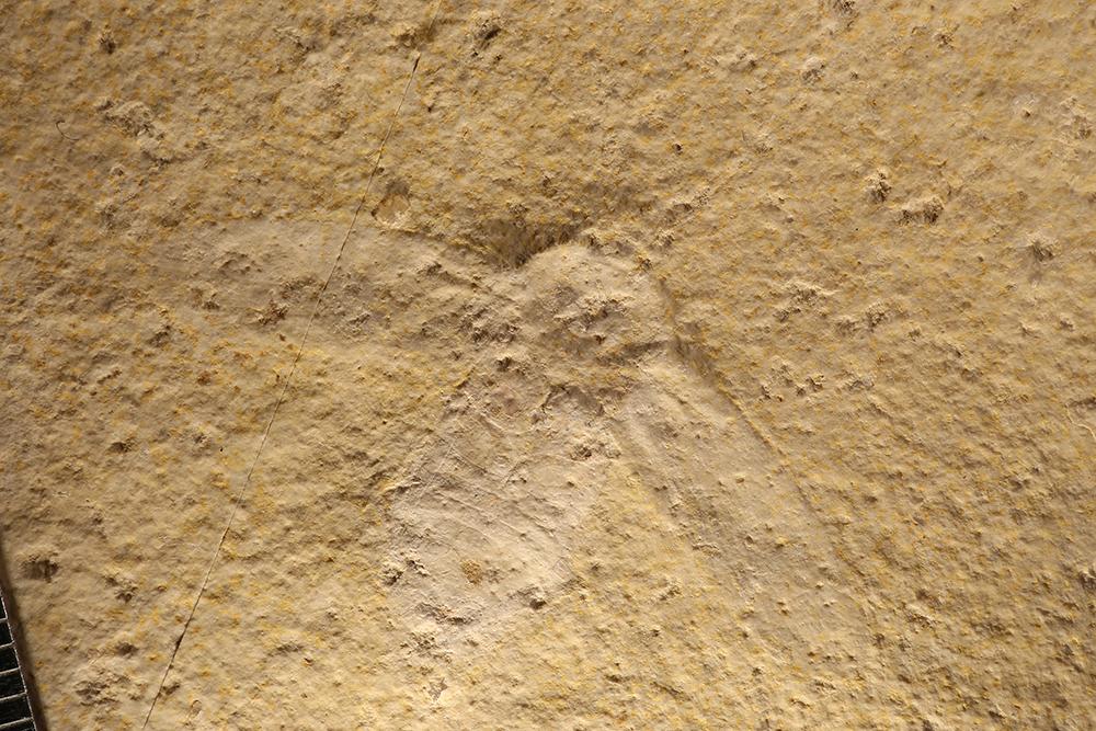 http://mczbase.mcz.harvard.edu/specimen_images/entomology/paleo/large/PALE-11547_Lithoblatta_lithophila.jpg