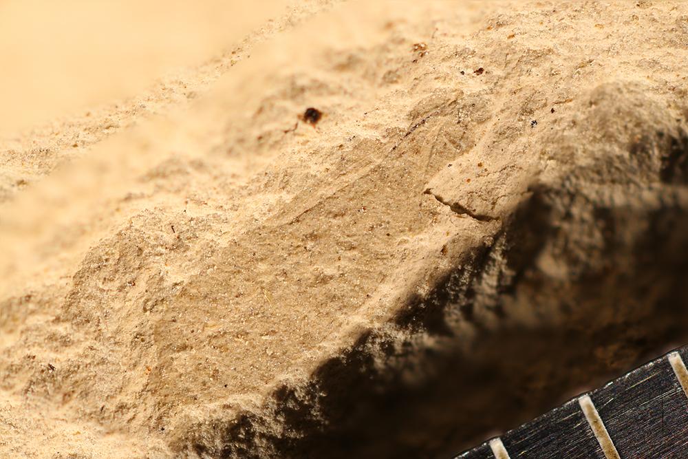 http://mczbase.mcz.harvard.edu/specimen_images/entomology/paleo/large/PALE-12139b_Dichentomum_tinctum_1.jpg
