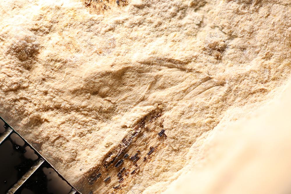 http://mczbase.mcz.harvard.edu/specimen_images/entomology/paleo/large/PALE-12269_Dichentomum_tinctum.jpg