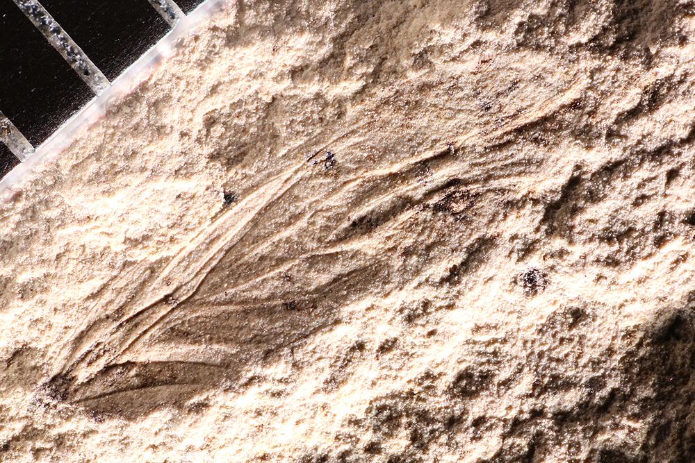 http://mczbase.mcz.harvard.edu/specimen_images/entomology/paleo/large/PALE-12431_Psocoptera.jpg