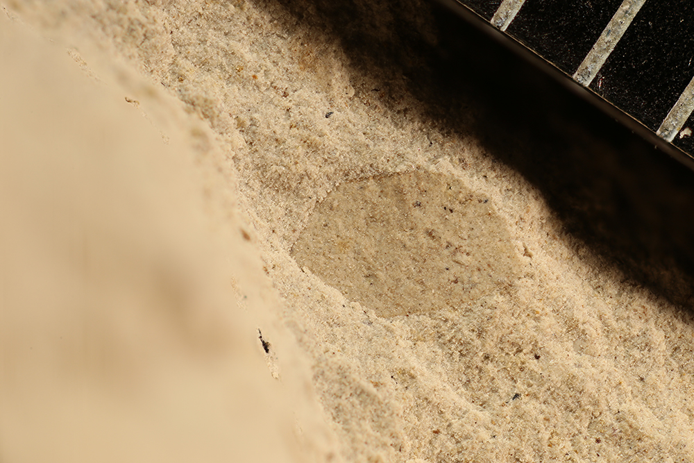 http://mczbase.mcz.harvard.edu/specimen_images/entomology/paleo/large/PALE-12730b_Pterygota.jpg