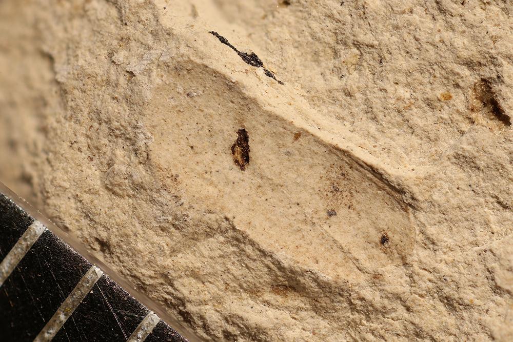 http://mczbase.mcz.harvard.edu/specimen_images/entomology/paleo/large/PALE-12736_Arthropoda.jpg