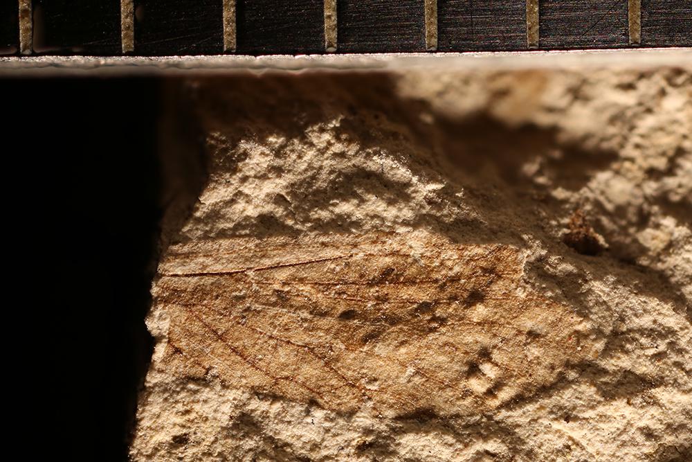 http://mczbase.mcz.harvard.edu/specimen_images/entomology/paleo/large/PALE-12891a_Lisca_sp.jpg