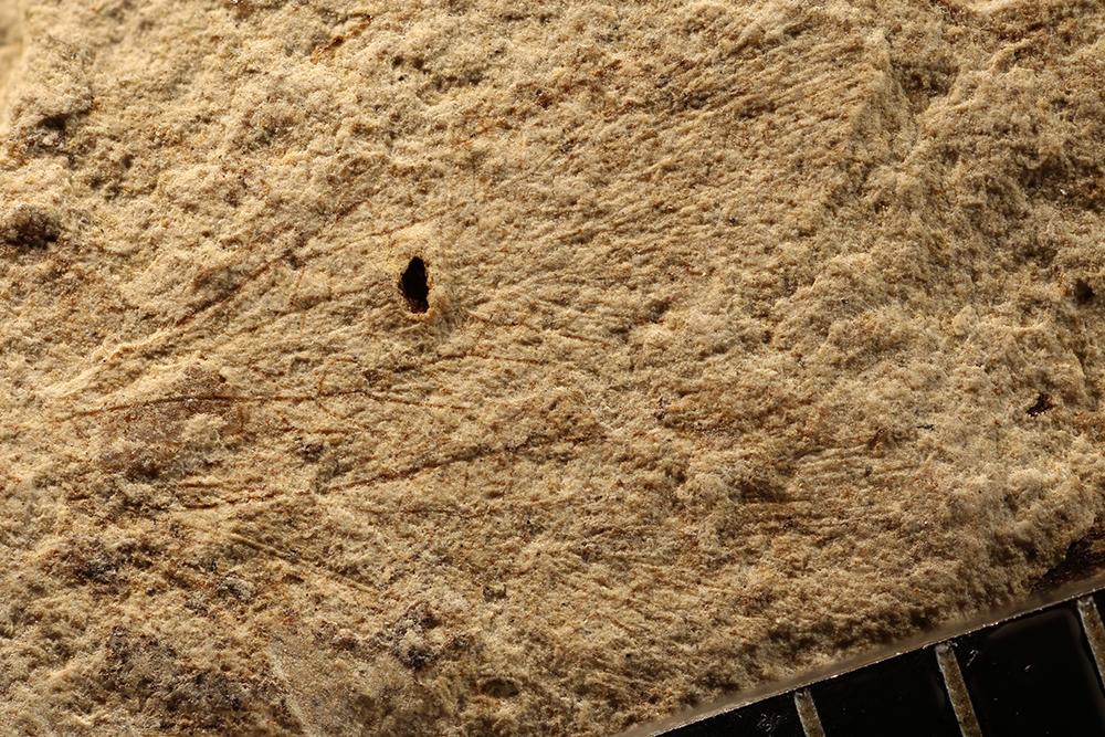 http://mczbase.mcz.harvard.edu/specimen_images/entomology/paleo/large/PALE-13208_Protembia_permiana.jpg