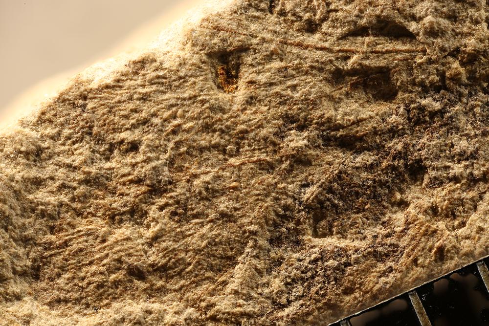 http://mczbase.mcz.harvard.edu/specimen_images/entomology/paleo/large/PALE-13210_Protembia_permiana.jpg