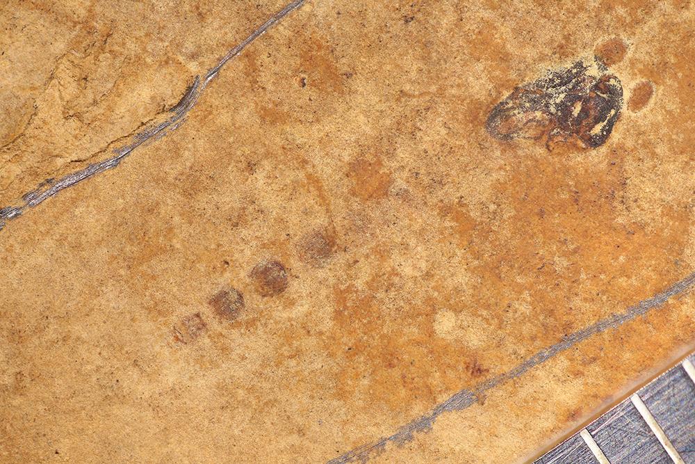 http://mczbase.mcz.harvard.edu/specimen_images/entomology/paleo/large/PALE-14033_Chironomidae_det_pupa.jpg