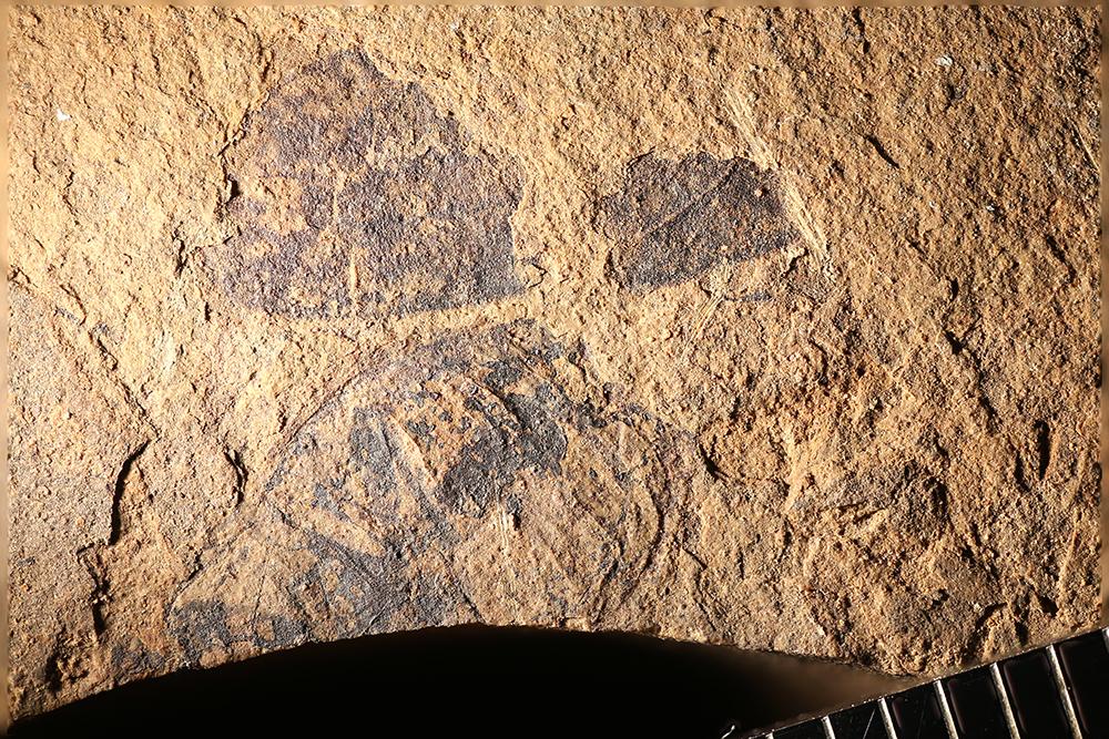 http://mczbase.mcz.harvard.edu/specimen_images/entomology/paleo/large/PALE-14085_Arthropoda_qm.jpg