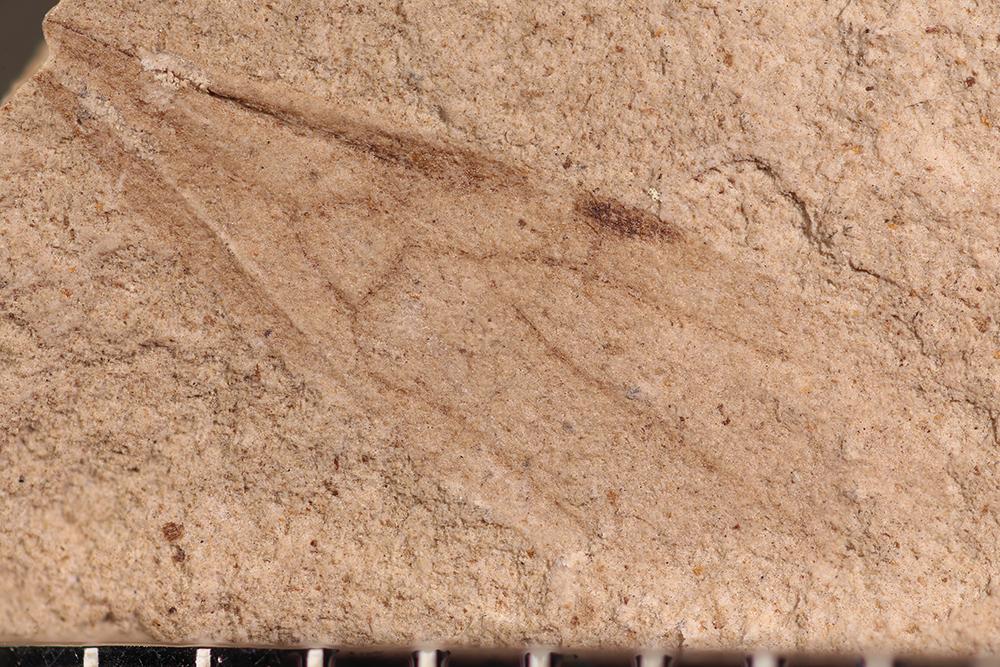 http://mczbase.mcz.harvard.edu/specimen_images/entomology/paleo/large/PALE-14113_Formicidae.jpg