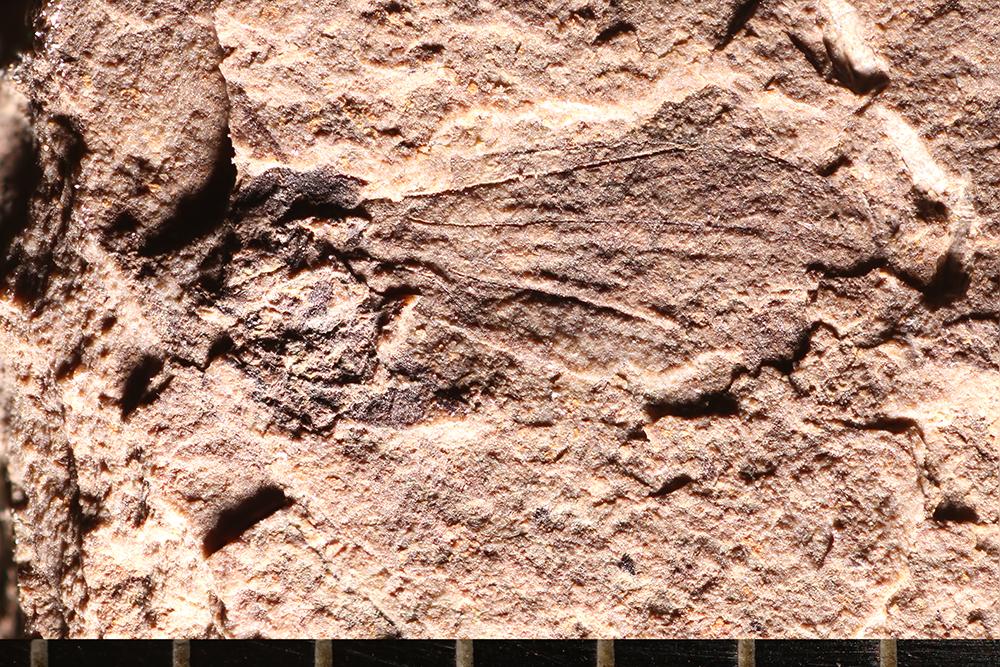 http://mczbase.mcz.harvard.edu/specimen_images/entomology/paleo/large/PALE-14172_Mycetophilidae_qm.jpg