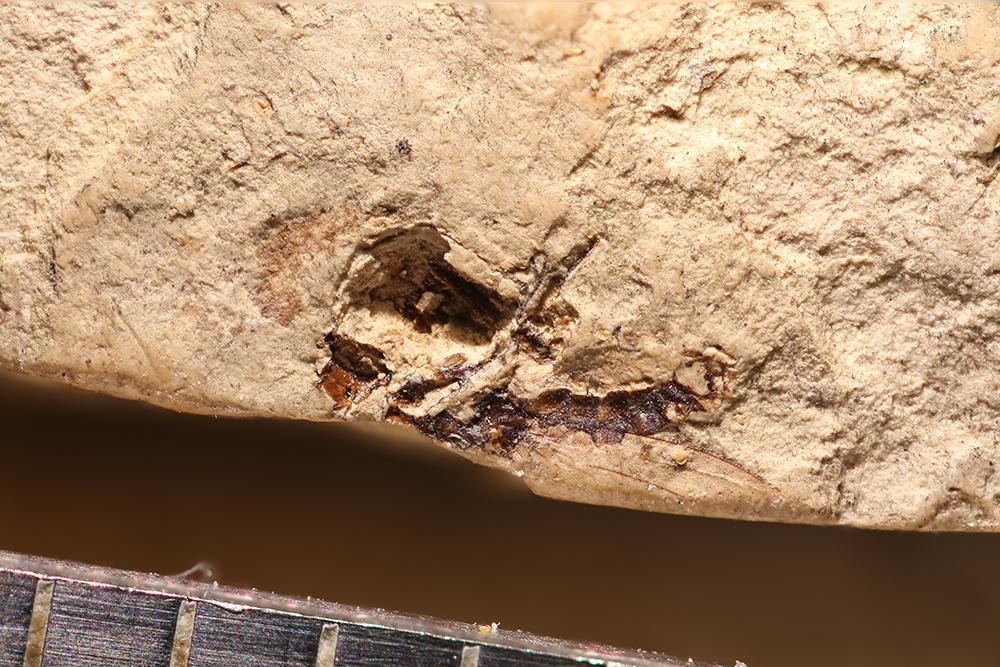 http://mczbase.mcz.harvard.edu/specimen_images/entomology/paleo/large/PALE-14277_Dolichopodidae.jpg