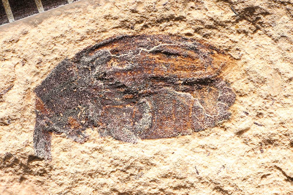http://mczbase.mcz.harvard.edu/specimen_images/entomology/paleo/large/PALE-14342_Larinus_sp.jpg
