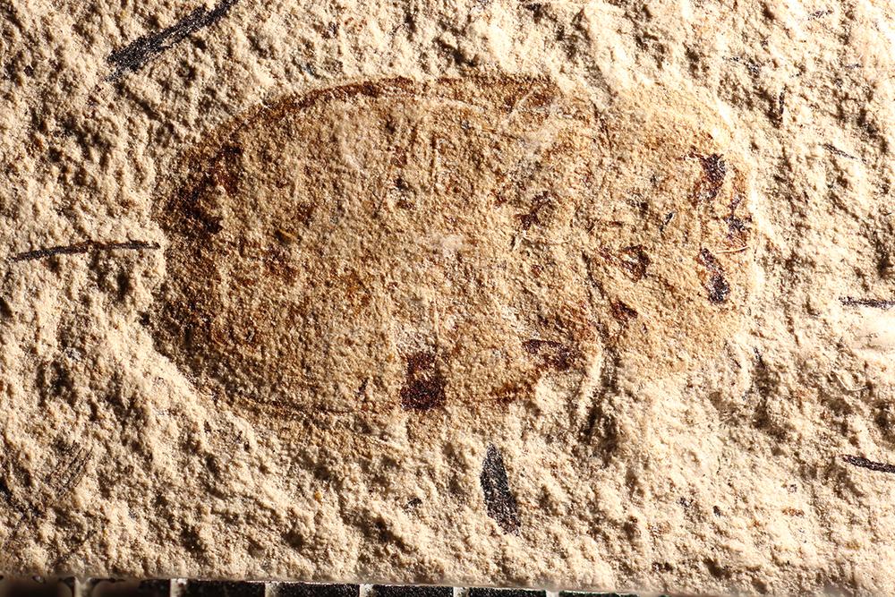 http://mczbase.mcz.harvard.edu/specimen_images/entomology/paleo/large/PALE-14350_Nitidula_aemula.jpg