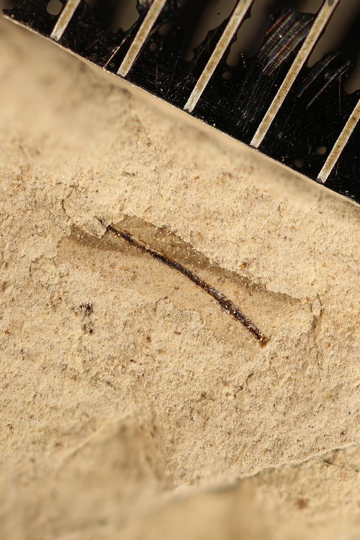 http://mczbase.mcz.harvard.edu/specimen_images/entomology/paleo/large/PALE-15165_Undetermined_undetermined.jpg