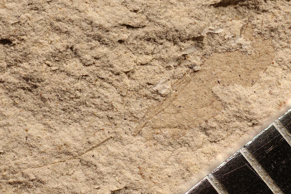 http://mczbase.mcz.harvard.edu/specimen_images/entomology/paleo/large/PALE-16768_Psocoptera.jpg