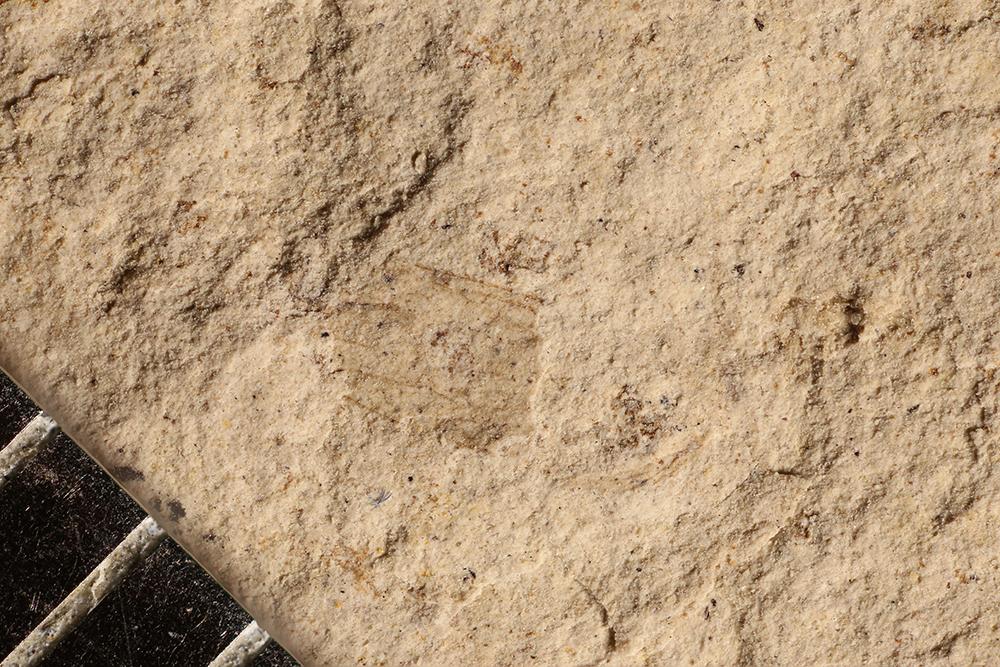 http://mczbase.mcz.harvard.edu/specimen_images/entomology/paleo/large/PALE-16771_Psocoptera.jpg