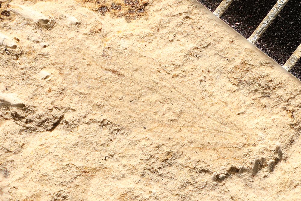 http://mczbase.mcz.harvard.edu/specimen_images/entomology/paleo/large/PALE-16852_Psocoptera.jpg