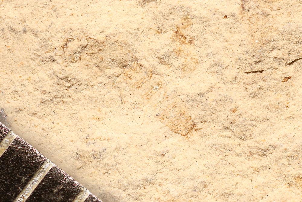 http://mczbase.mcz.harvard.edu/specimen_images/entomology/paleo/large/PALE-16872_Arthropoda.jpg