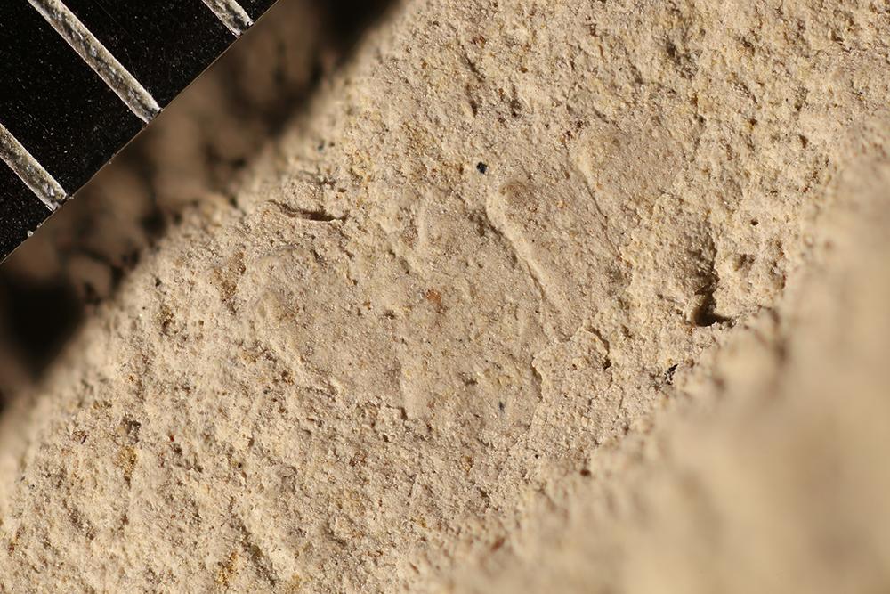 http://mczbase.mcz.harvard.edu/specimen_images/entomology/paleo/large/PALE-16964_Arthropoda.jpg