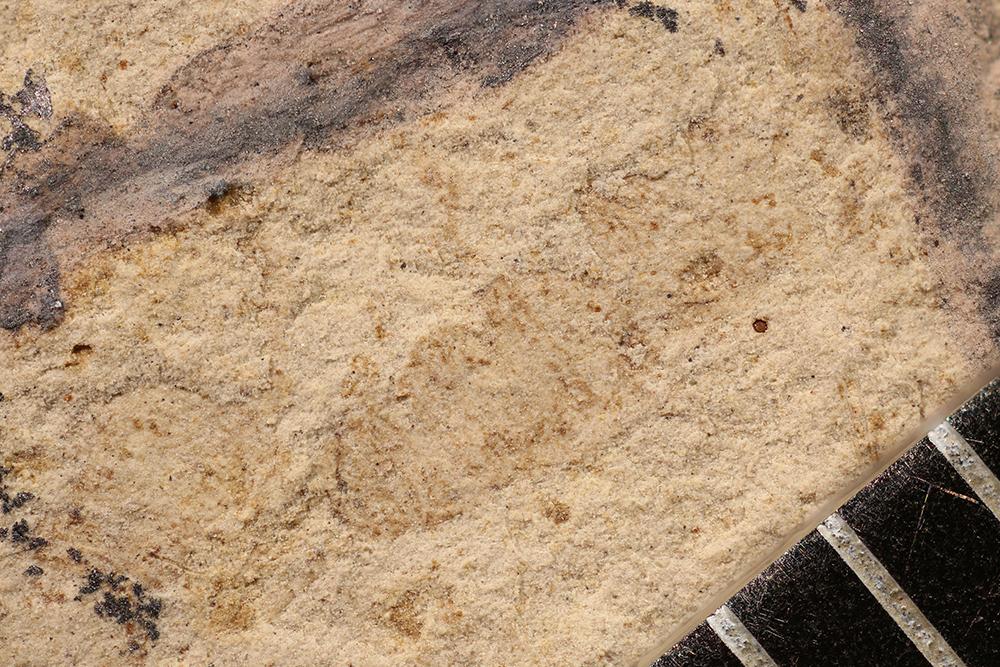 http://mczbase.mcz.harvard.edu/specimen_images/entomology/paleo/large/PALE-17062_Arthropoda.jpg