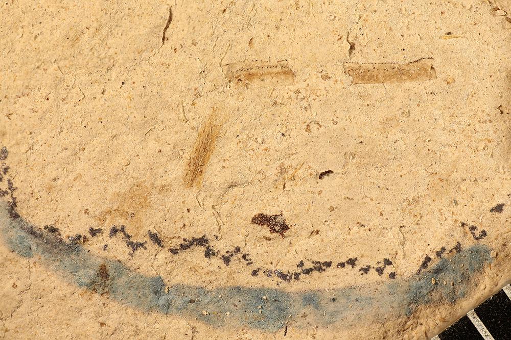 http://mczbase.mcz.harvard.edu/specimen_images/entomology/paleo/large/PALE-17378_Arthropoda_leg.jpg