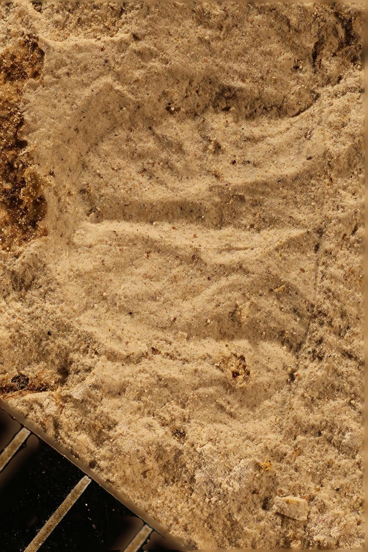 http://mczbase.mcz.harvard.edu/specimen_images/entomology/paleo/large/PALE-17442_Arthropoda_qm.jpg