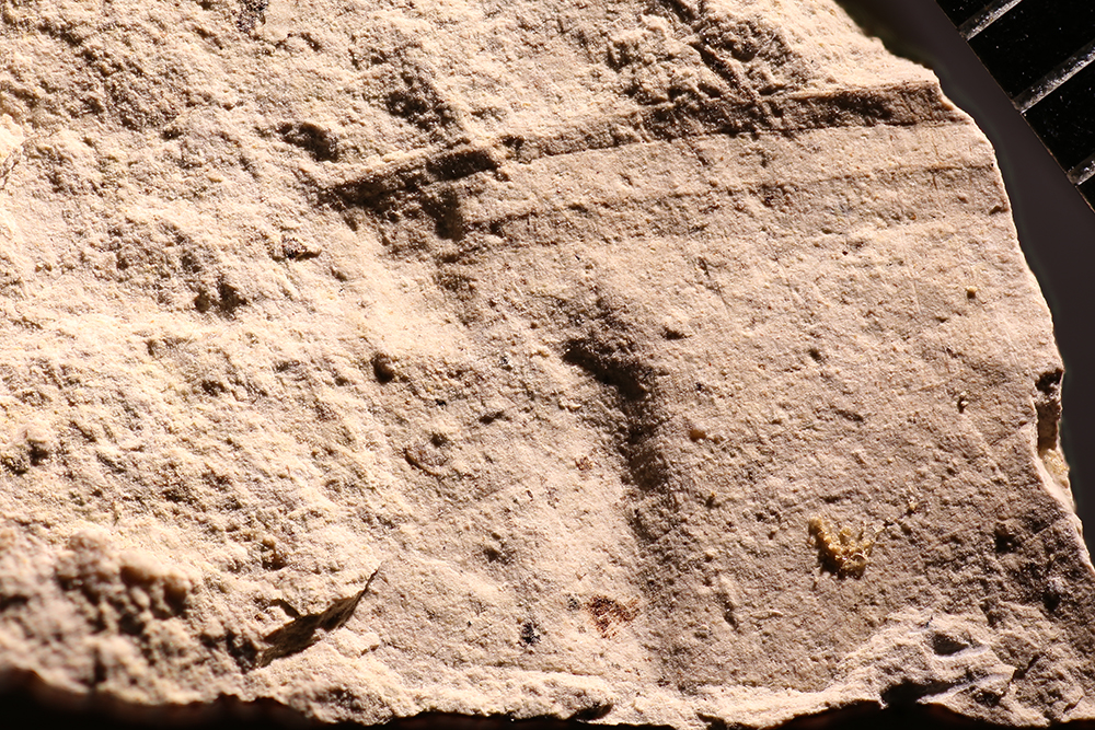http://mczbase.mcz.harvard.edu/specimen_images/entomology/paleo/large/PALE-17717_Ephemeroptera.jpg