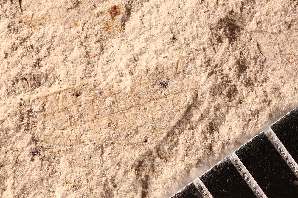 http://mczbase.mcz.harvard.edu/specimen_images/entomology/paleo/large/PALE-17719_Ephemeroptera.jpg