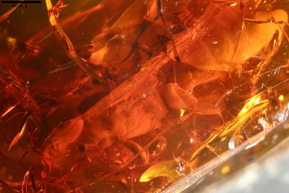 http://mczbase.mcz.harvard.edu/specimen_images/entomology/paleo/large/PALE-17817_Hymenoptera_3.jpg